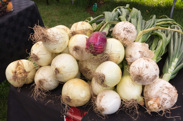 Onions for sale at Farmers Market