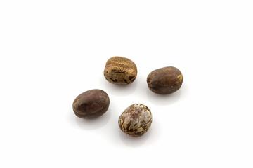 Rubber Seeds,hevea brasiliensis.