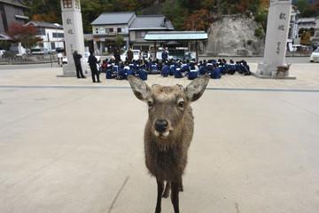 宮島での歓迎