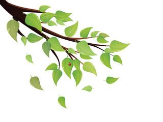 Green Leaves Tree Branch