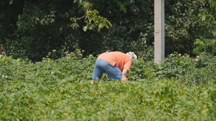 Woman working in the garden in the village