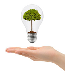 Hand and bulb with tree