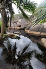 Mare dans la jungle, Seychelles