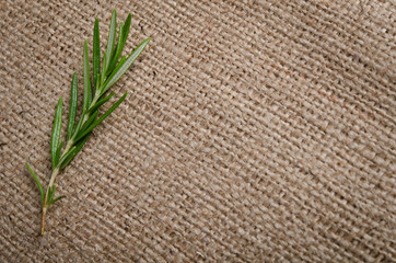 a sprig of rosemary on burlap background