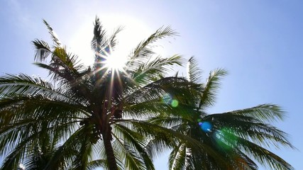 Coconut Palm against Blue Sky and Bright Sun. Slow Motion.