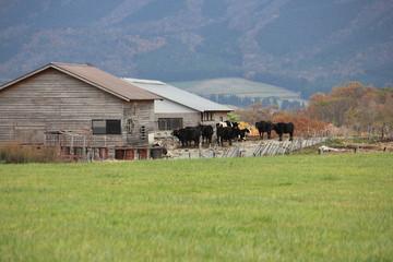 牧場の牛舎