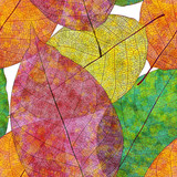 Fototapety Seamless pattern, autumn leaves. Vector, EPS10