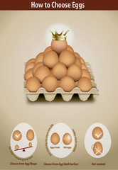 Vector of How to Choose Eggs
