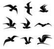 Seagull set. Vector