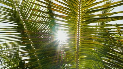 Bright Sun Shining through Leaves of Palm. Slow Motion.