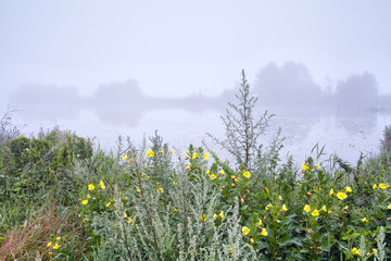yellow wildflowers by lake in fog