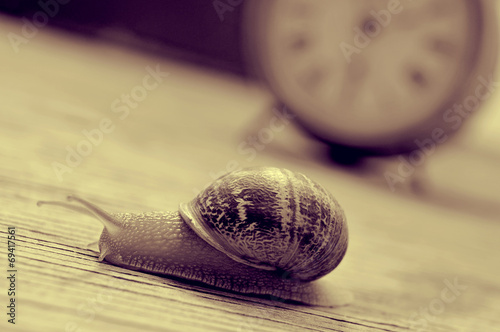 Leinwanddruck Bild land snail and clock, in sepia tone