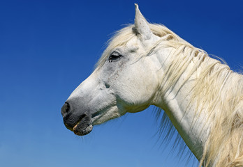 Head of a horse against the sky