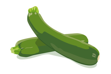 Zucchini Vector Illustration