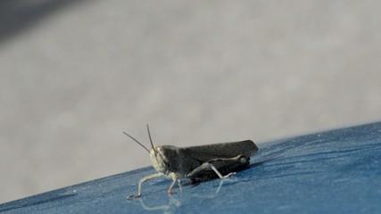 Locust Moves Slowly