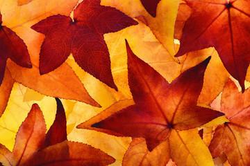 Leuchtende Herbstblätter