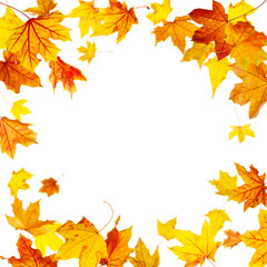 Falling autumn maple leaves frame isolated on white