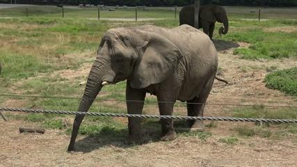 Elephants, Wildlife, Mammals, Zoo Animals