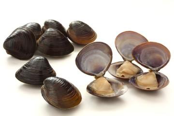 しじみ 中身 貝 食材