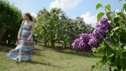 blooming lilac tree branch move in wind and blurred woman
