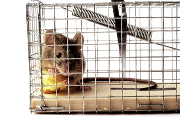 Scoop or mouse trap