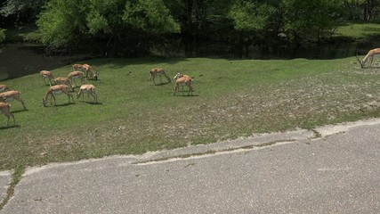Deer Family, Mammals, Zoo Animals, Wildlife