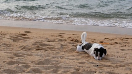 Funny Cute Dog Playing in Sand at the Beach.