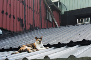 Cat lying on the roof.
