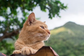 Ginger tabby cat lying on the roof.
