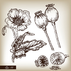 Kitchen herbs and spices. Poppies set hand drawn illustration in