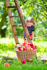 Little girl in an apple garden