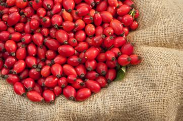 Dog rose Fruits On Jute - DSC1650-1652