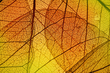 leaf texture - in detail