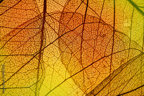 leaf texture - in detail - 69437305