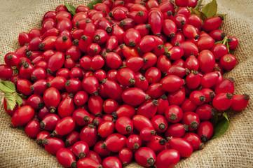 Dog rose Fruits On Jute - DSC1552-1557