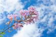canvas print picture - fleurs de îles sur fond de ciel