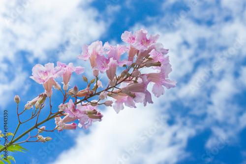 canvas print picture fleurs de îles sur fond de ciel