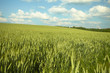 canvas print picture - green field