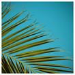 canvas print picture - Palme