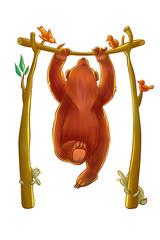 bear doing chin-ups