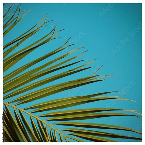 canvas print picture Palme