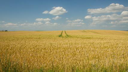 trail through the  field