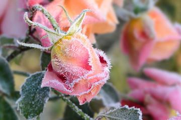 Blumen 305