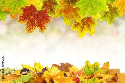 Leinwandbild Motiv Herbst 57
