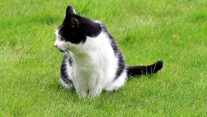 Katze sitzt auf Wiese und faucht