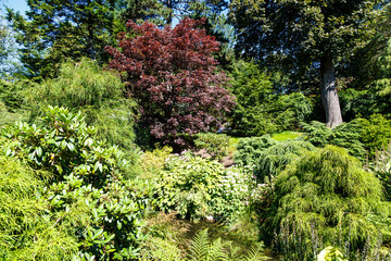 Cypress Trees and Japanese Maples