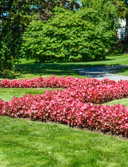 Lines of Pink Flowers on Green Lawn