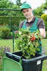Gärtner füllt Gartenabfall in Biotonne