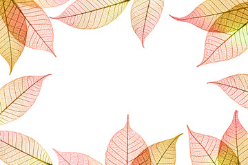Transparent autumnal leaves frame on white background