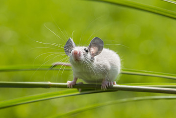 a little mouse sitting on a grass